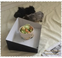 meerschweinchen-fressen-1